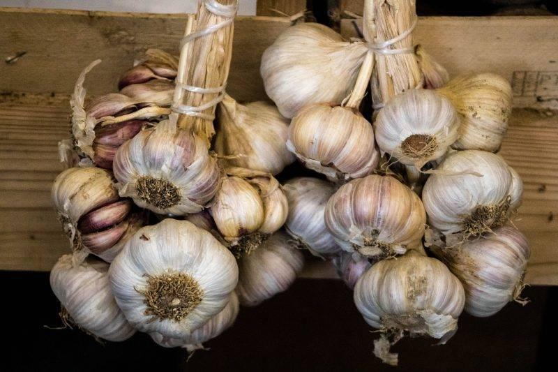 Как хранить чеснок на зиму в домашних условиях, чтобы не высох и не пророс