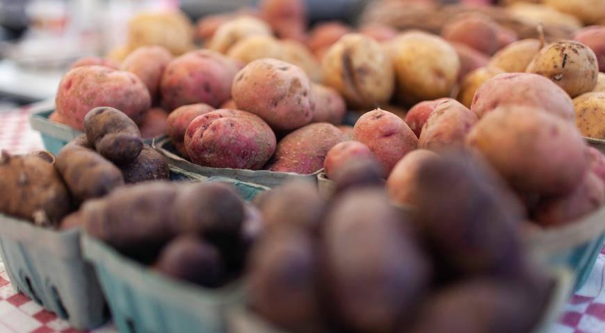 Картофель «синеглазка»: описание сорта, фото, отзывы