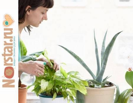 Как ухаживать за комнатными растениями - основные правила