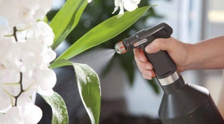 Можно ли пересадить орхидею во время цветения: пошаговая инструкция и особенности пересадки