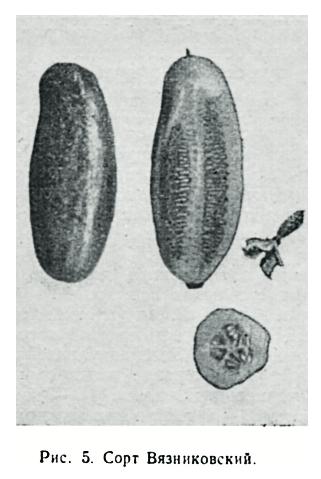 Огурцы: состав, свойства, польза для здоровья и похудения