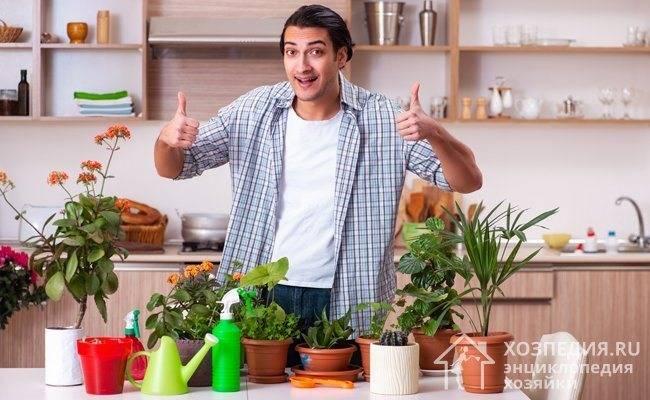 Щитовка на комнатных растениях: методы борьбы и профилактики