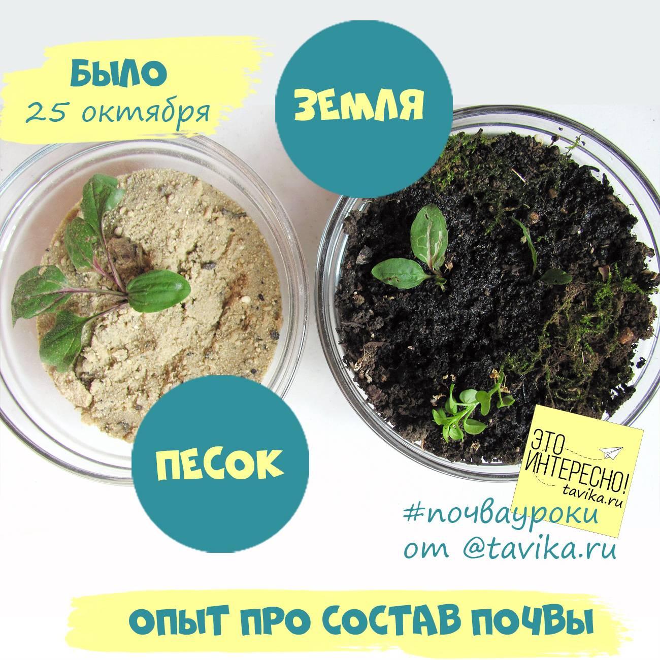 Как раскислить почву: 5 простых и эффективных способов