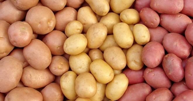 Лучшие сорта картофеля: самые урожайные, вкусные и другие виды картошки