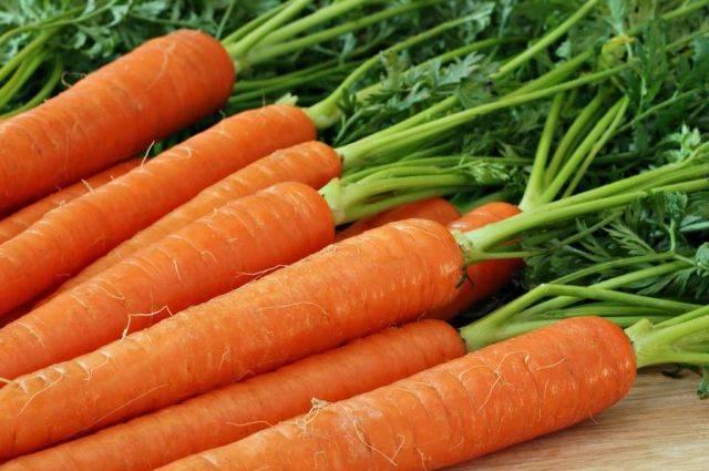 После какой культуры можно сажать морковь в открытый грунт