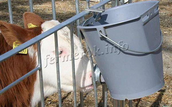 Как сделать ясли для коровы?