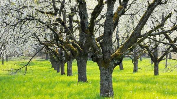 Чем полить дерево, чтобы оно быстро засохло и погибло, народные средства