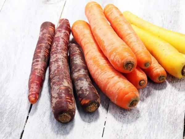 """Морковь purple sun f1 - описание сорта, фото, отзывы, посадка и уход - журнал """"совхозик"""""""