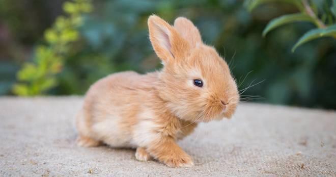 Сколько живут кролики в домашних условиях