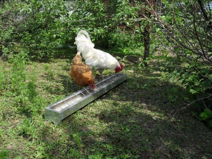 Бункерная кормушка для кур — делаем самостоятельно