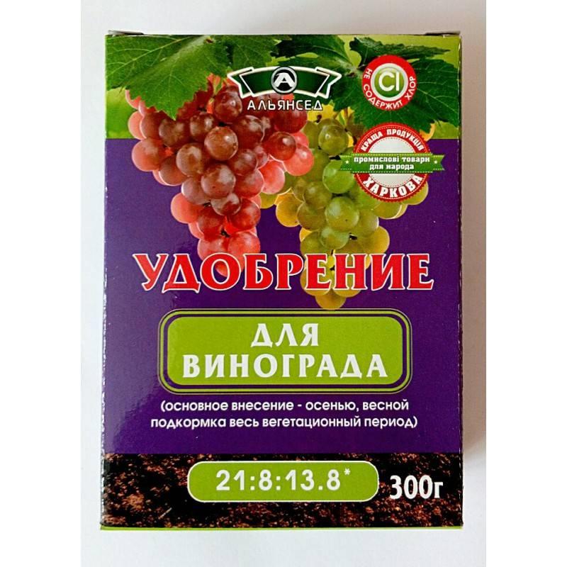 Сорт винограда румба: описание, фото