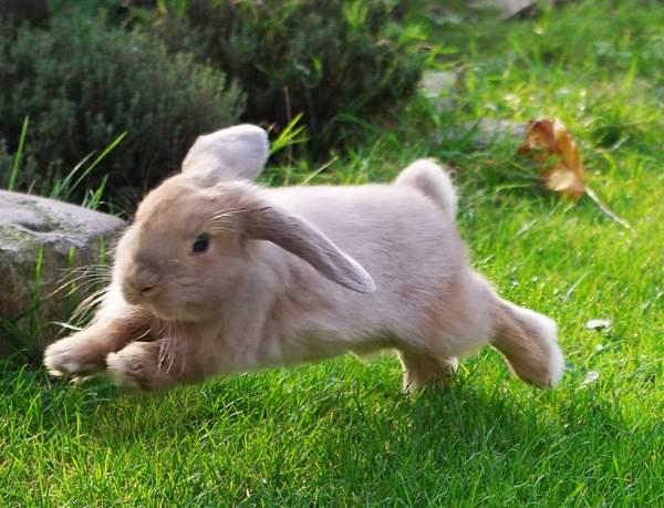 Обзор самых интересных и малоизвестных фактов про кроликов и кролиководство