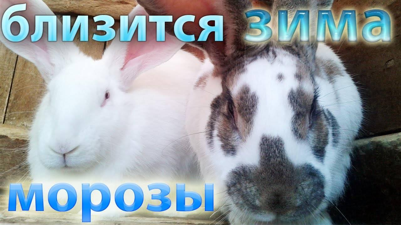 Содержание кроликов зимой на улице