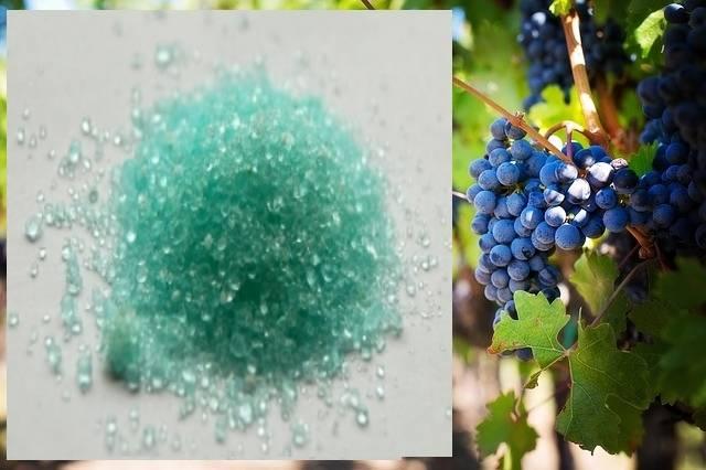 Опрыскивание винограда от болезней и вредителей: сроки, схема, график, препараты