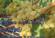 Как формировать виноград: советы и схемы