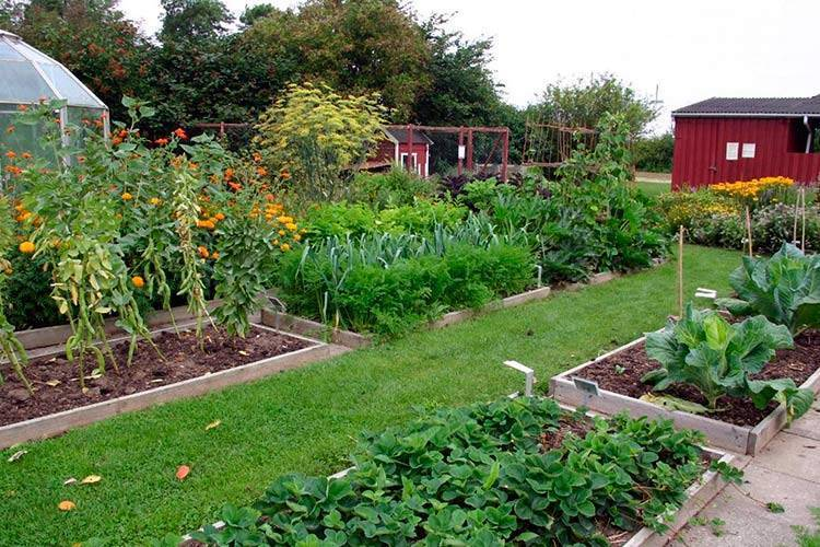 Таблица совместимости растений в саду и огороде – бузинушка