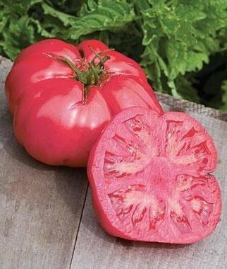 Описание сорта томата розовый царь и его характеристика