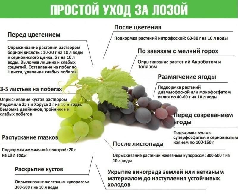 Подкормка винограда осенью: когда и как проводить