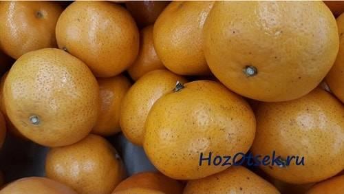 Как правильно хранить мандарины дома. как правильно хранить мандарины в домашних условиях? как хранить мандарины дома