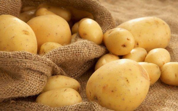 Сорт картофеля «зекура» – описание и фото