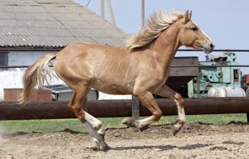 Лошадь вороной масти: описание, фото, уход | мои лошадки