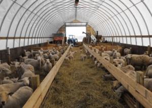 Как самостоятельно сделать овчарню для овец?