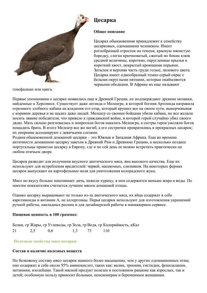 Строение цесарки - разведение и содержание цесарок - птицеводство - собственник