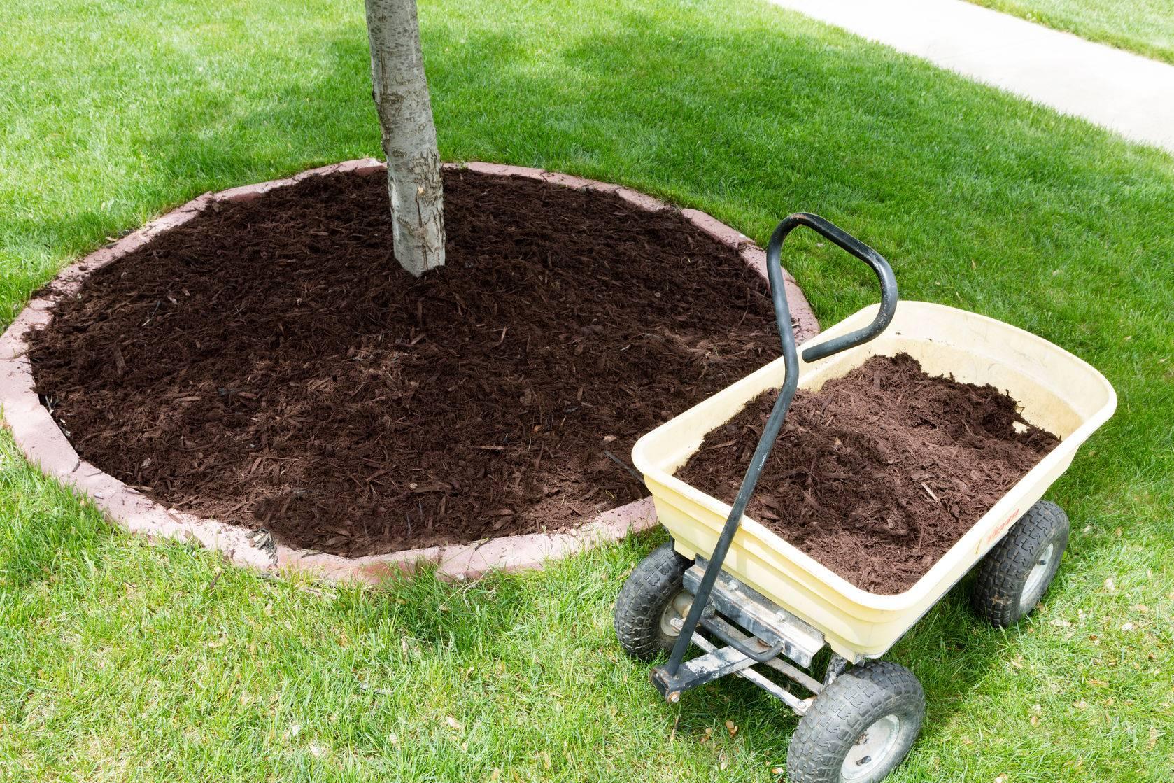 Как применять опилки в саду и в огороде   огородник