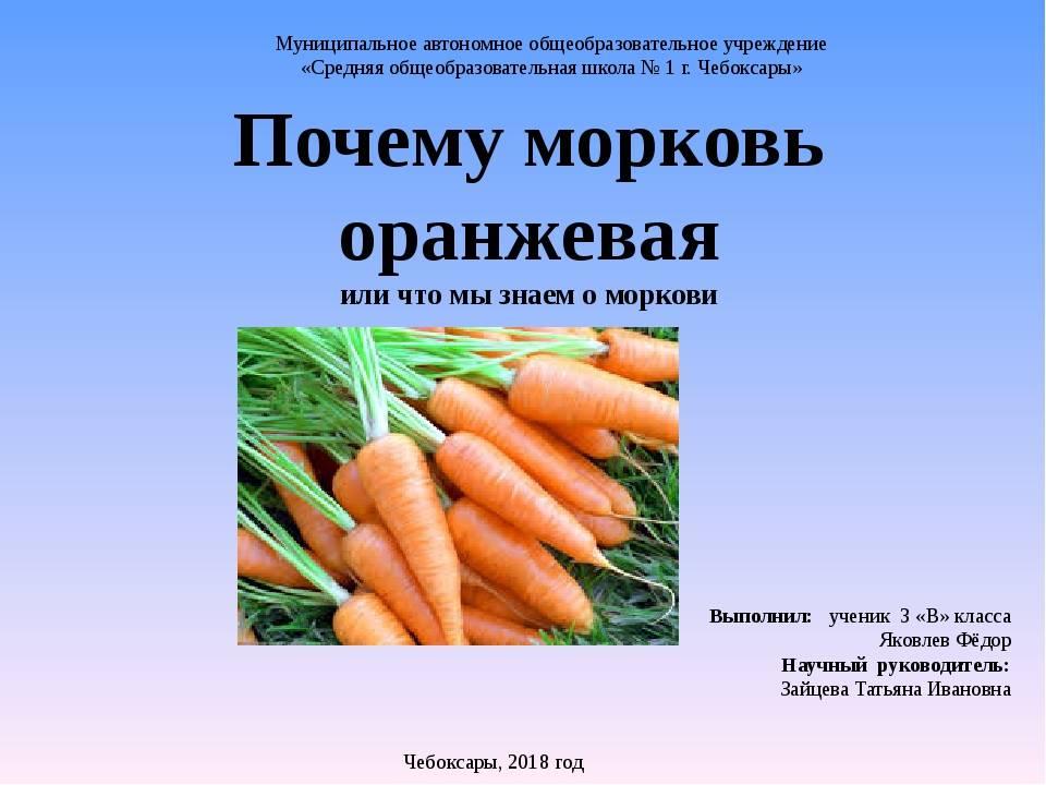 Почему морковь оранжевая: когда и как стала такой окраски — selok.info