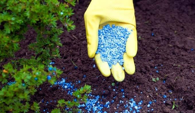 Фосфорные удобрения, какие, в каких случаях и как лучше применять на огороде. калийно-фосфорные удобрения: названия и применение средств