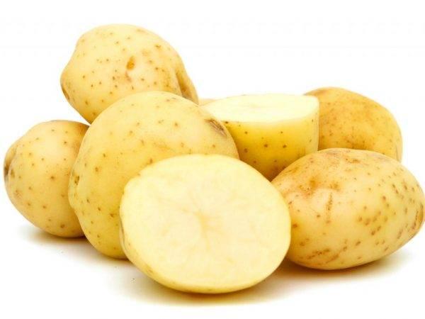 """Картофель """"триумф"""": описание сорта, характеристики, фото и особенности ухода русский фермер"""