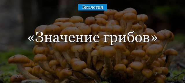 Значение грибов в природе и жизни человека: таблица