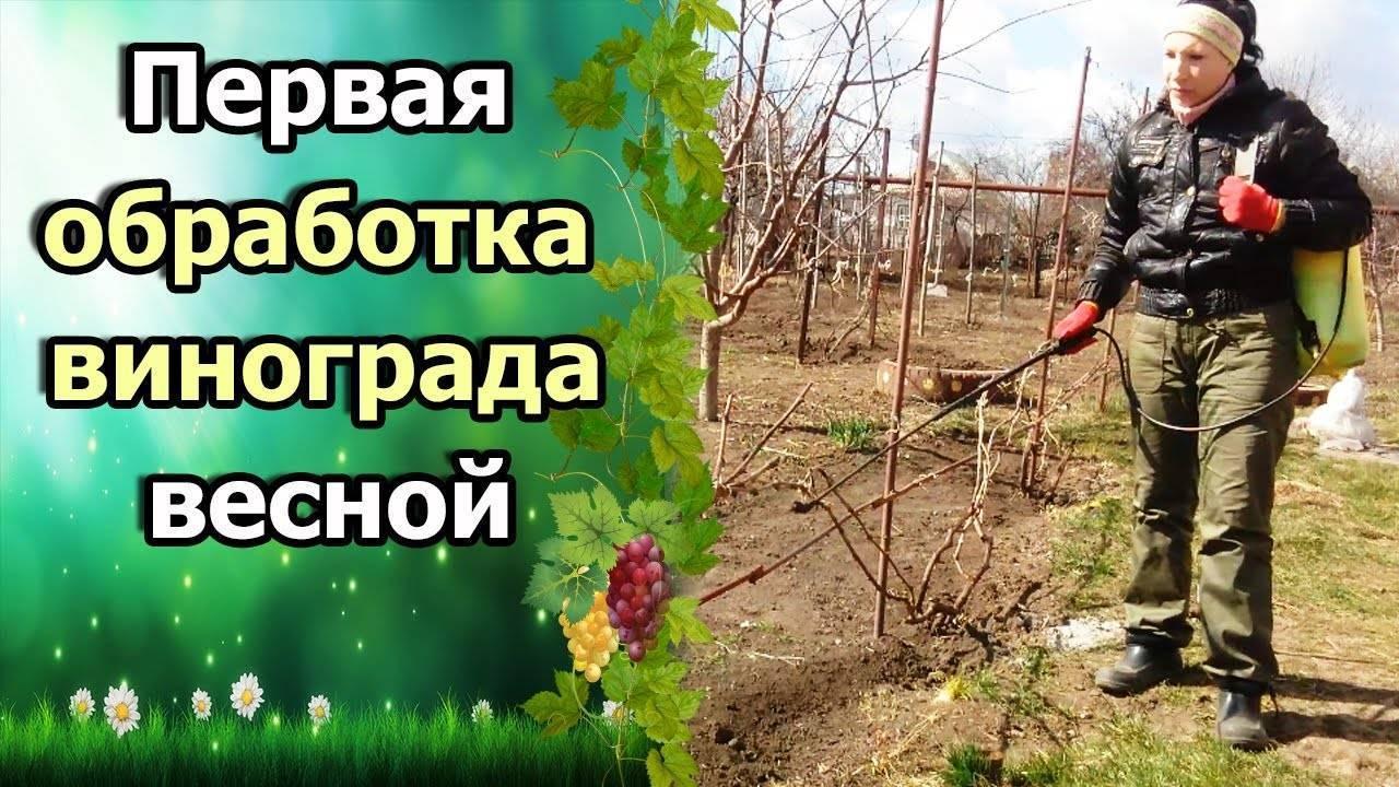 Обработка винограда медным купоросом: дозировка, весна