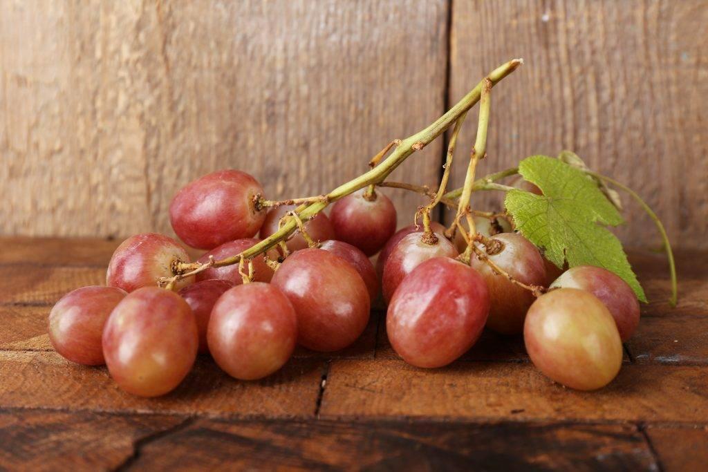 Виноград рута: описание сорта, фото, видео, отзывы