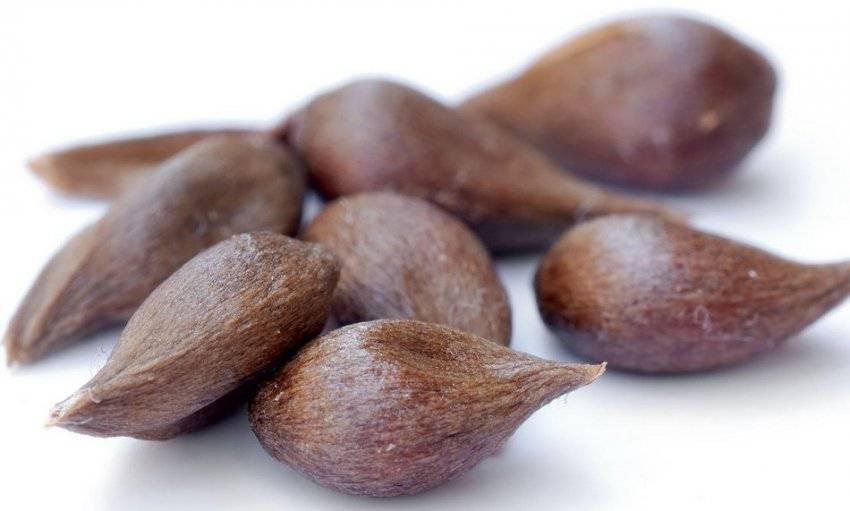 Косточки яблок польза и вред, как употреблять, сколько можно съесть