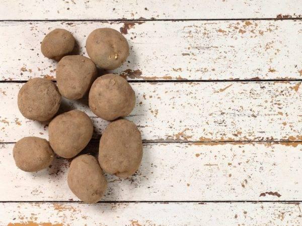 ✅ киви: описание семенного сорта картофеля, характеристики, агротехника - tehnomir32.ru