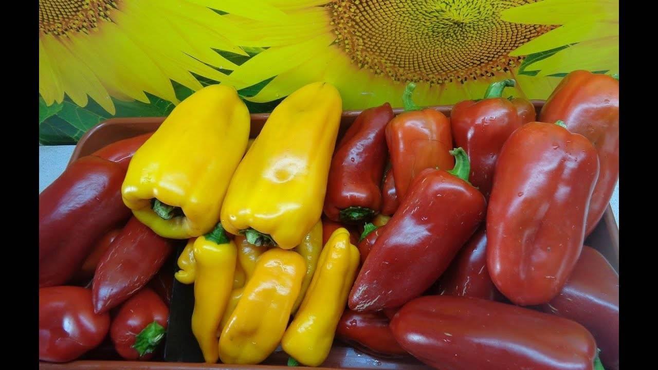 Чем подкормить перцы в теплице и в открытом грунте