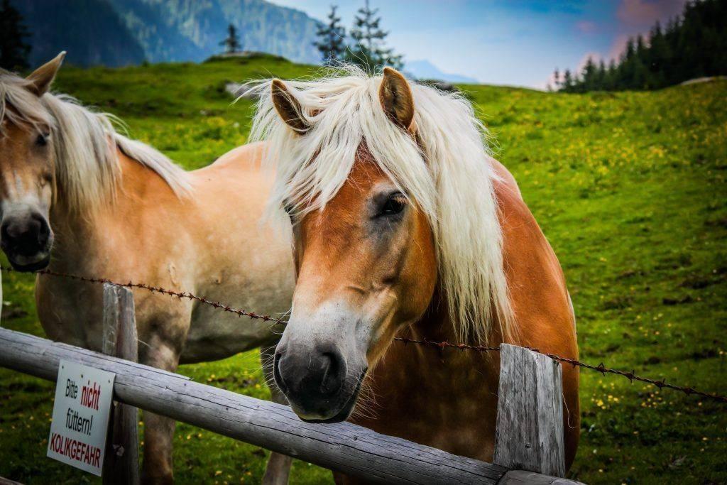 Сколько живут лошади: продолжительность жизни животного в домашних условиях