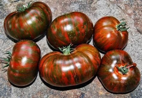 Шоколадный томат: характеристика и описание сорта, отзывы
