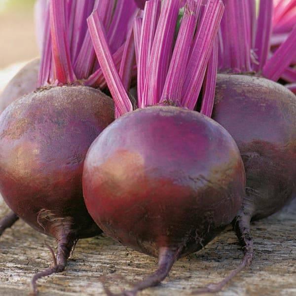 Чем подкормить морковь и свеклу в июне в открытом грунте: удобрение после всходов
