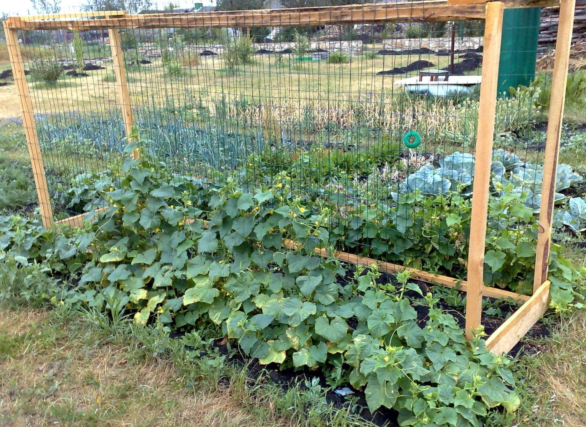 Огурец зозуля f1: характеристики, особенности выращивания, отзывы огородников