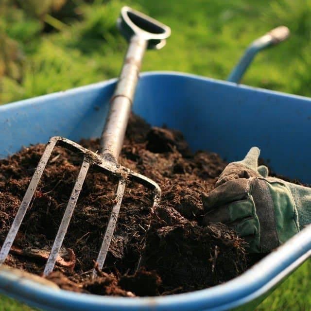 Подкормка смородины: виды удобрений, сроки, дозировки