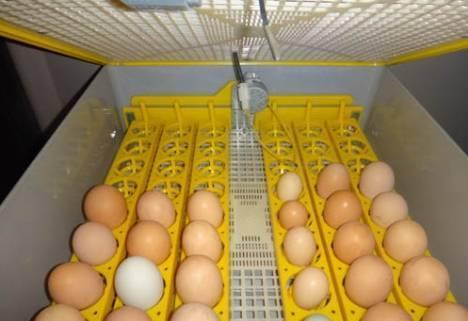Инкубация яиц selo.guru — интернет портал о сельском хозяйстве