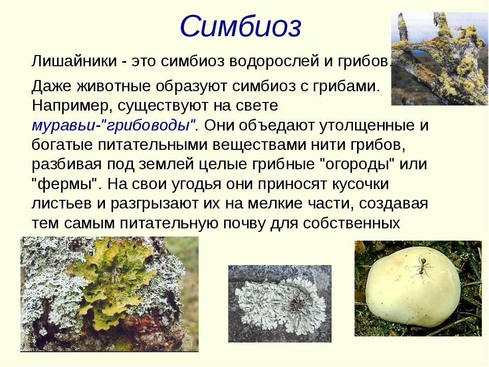 Симбиоз — википедия. что такое симбиоз