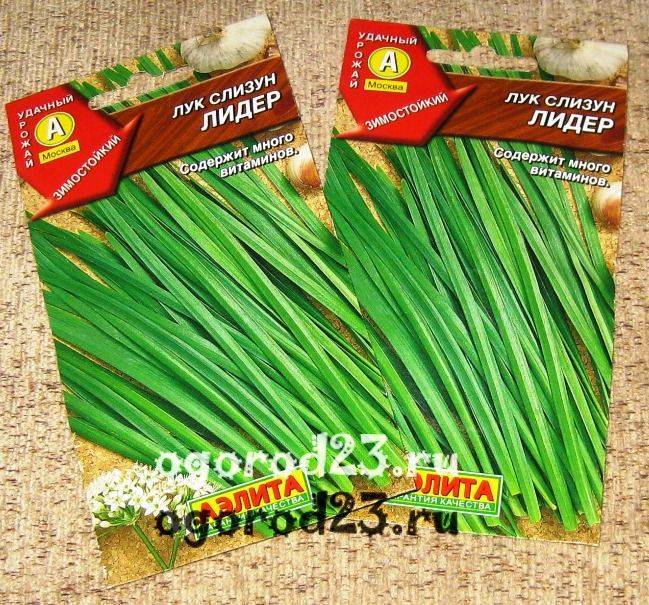 Лук-слизун: посадка семенами и рассадой. уход за луком-слизуном | огородники