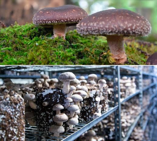 Самые дорогие грибы в мире: названия, фото. какие грибы самые дорогие в россии?