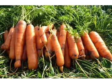 Как сушить морковь на зиму в домашних условиях: все способы заготовки сушеной моркови » сусеки