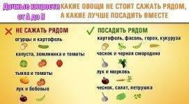 Что посадить рядом с морковью. хорошие и плохие соседи на грядке - etocvetochki.com