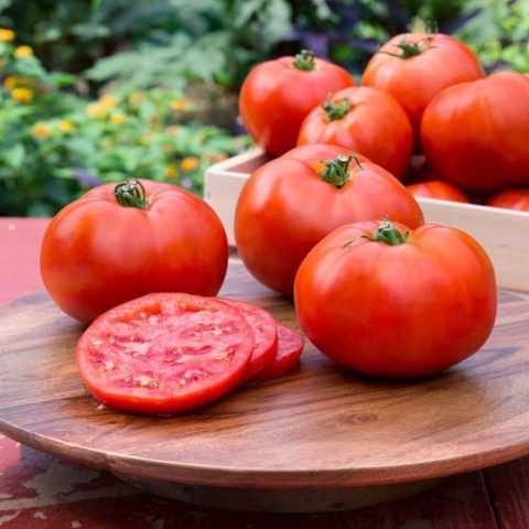 Чем опрыскивать томаты для роста и от вредителей