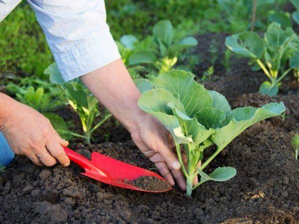 20+ холодостойких овощей: что сажать весной в певую очередь